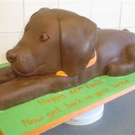 chocolate-dog